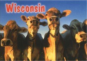 Postcard_wisconsin_cows
